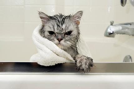 宠物沐浴液选择大法