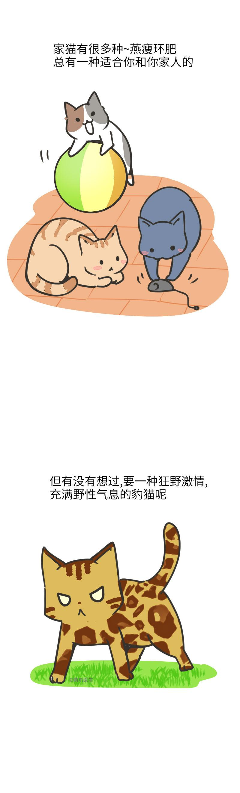 长得像豹的猫就是豹猫?养野生动物也是犯法的喂!
