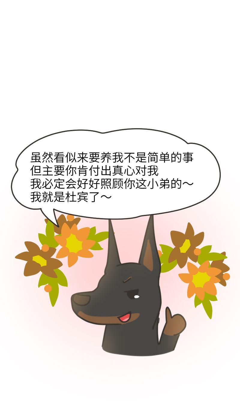 """""""霸道总裁""""杜宾犬是如何走红的?"""