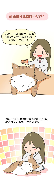 西伯利亚猫