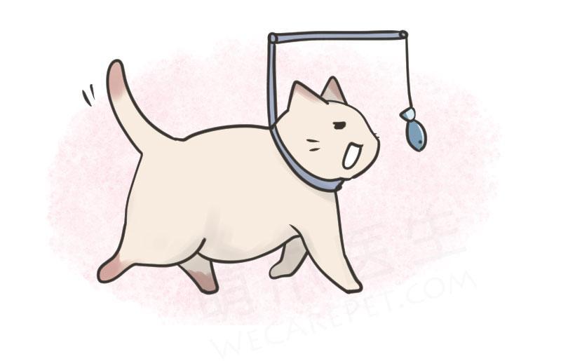 当猫咪胖成犭苗口米,是时候放出这个大招了……