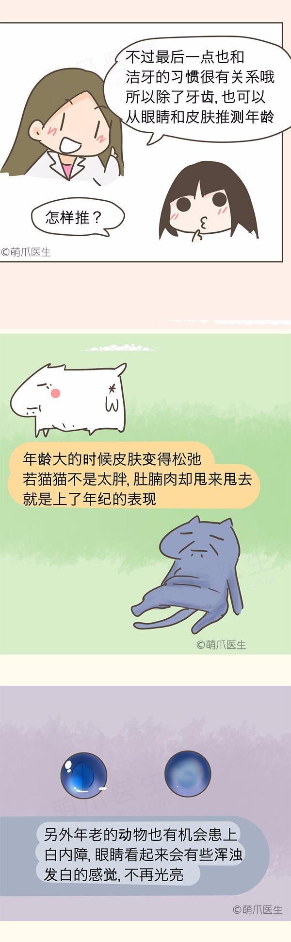 漫画|如何判断猫狗年龄?