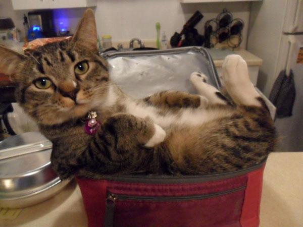 只有你想不到,没有猫睡不下的地方!