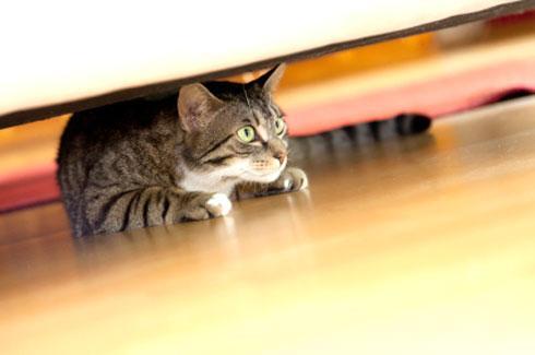 遛猫Q&A:一出门就趴下,这样还怎么遛猫嘛?