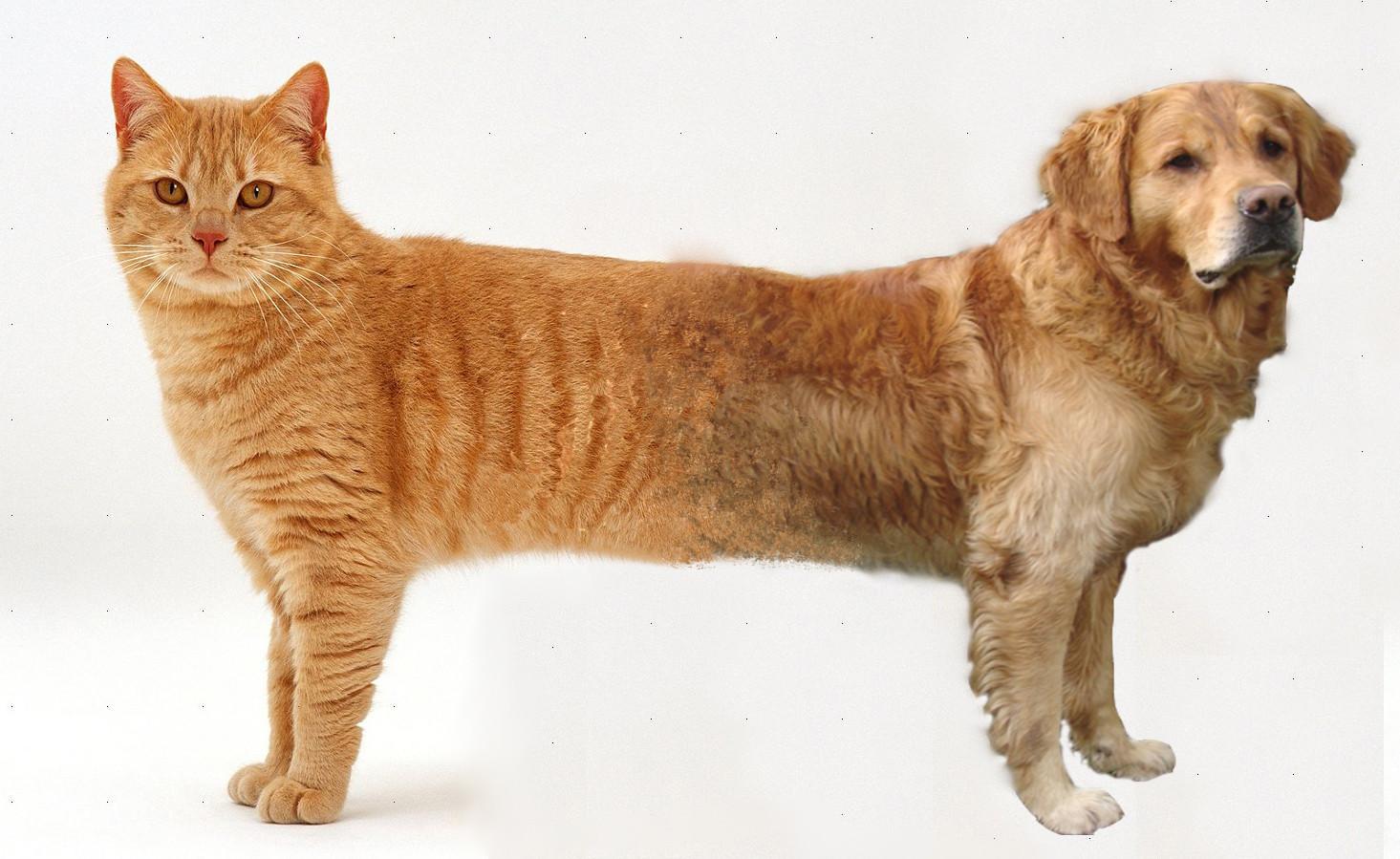 一猫一狗的刷牙训练日记