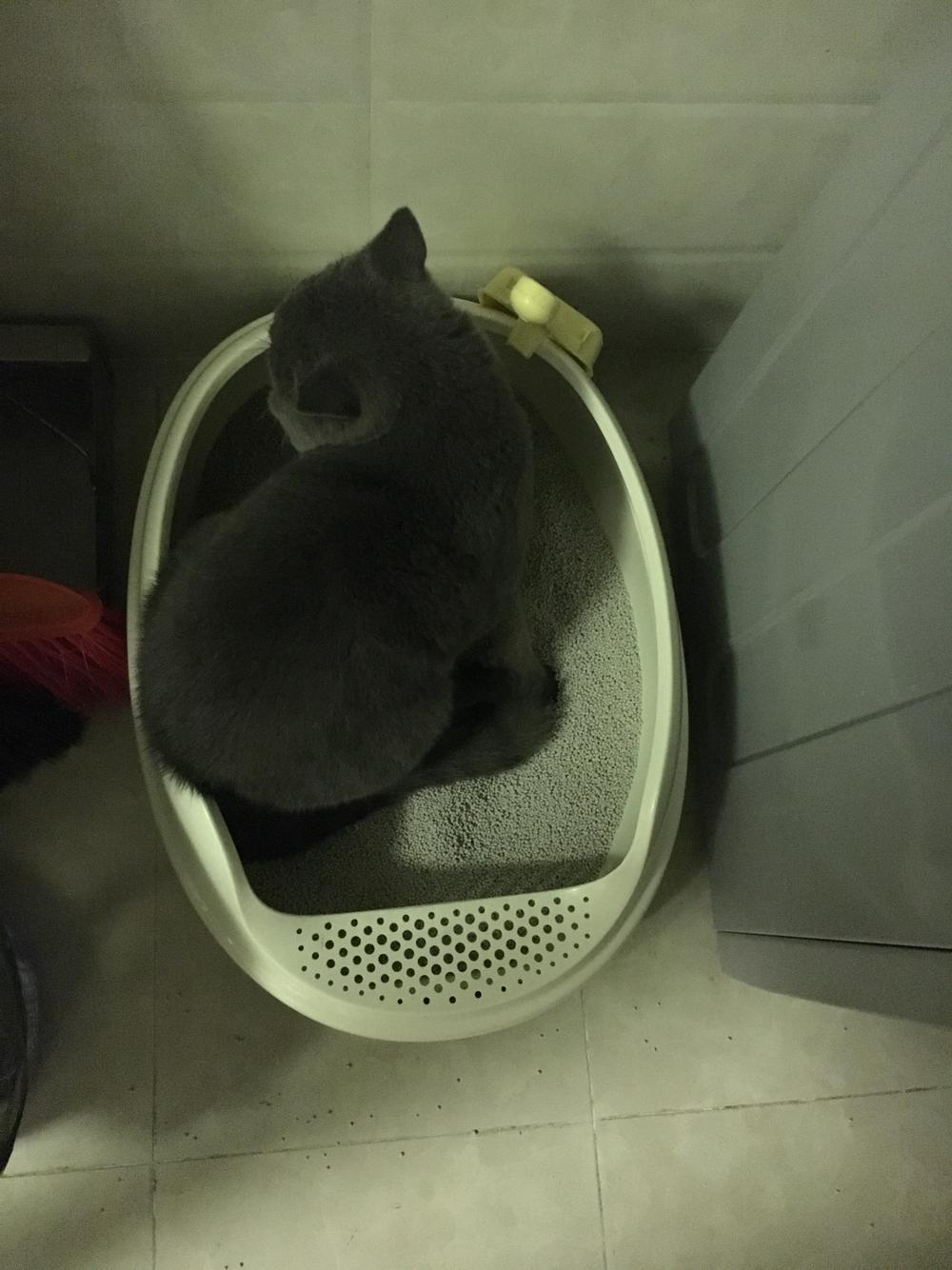 6个月绝育公猫突然开始拉便便在猫砂盆外