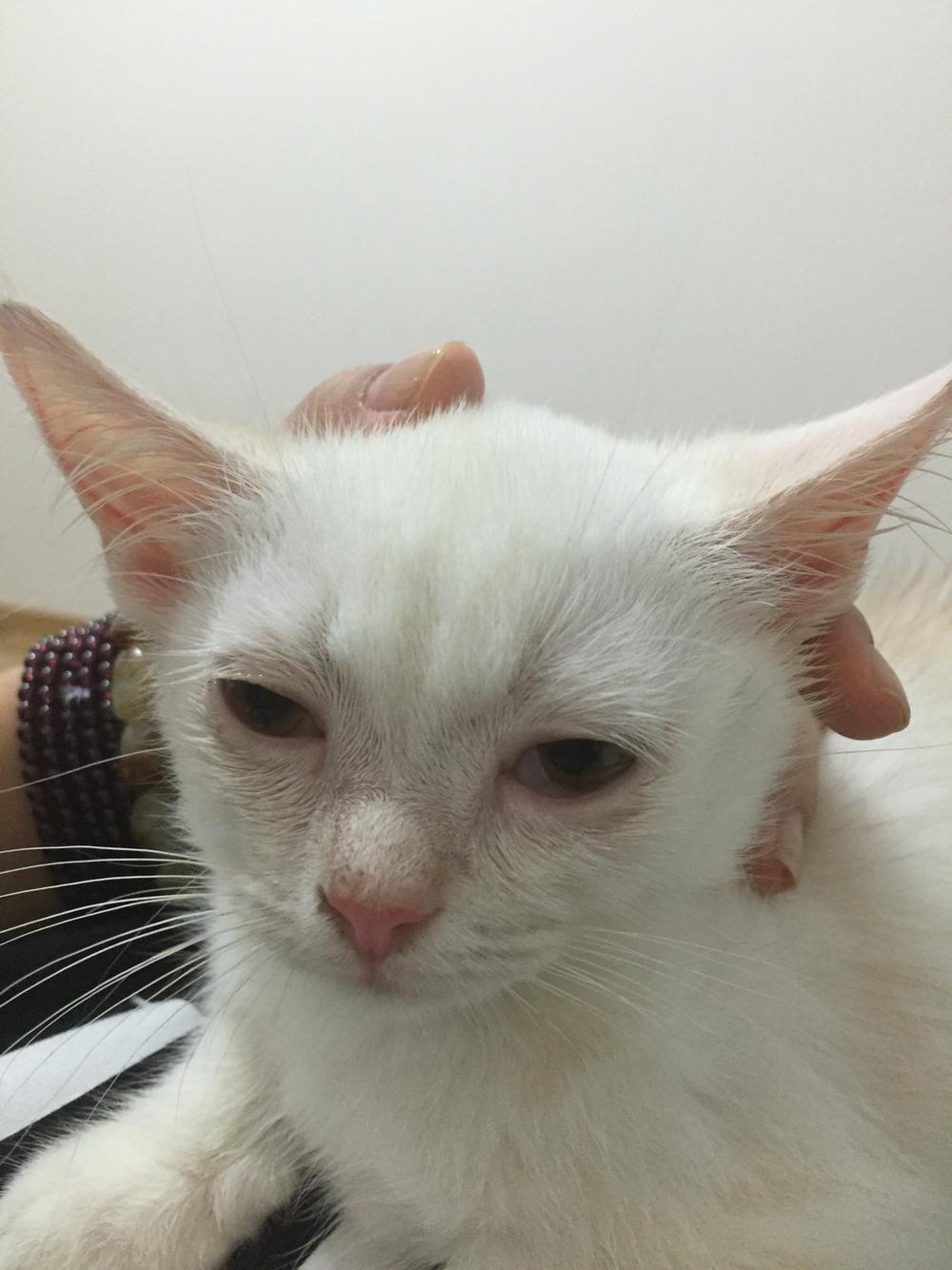 猫咪先是拉粑粑有血换粮后又便秘,寄养拿回来有秃了两块