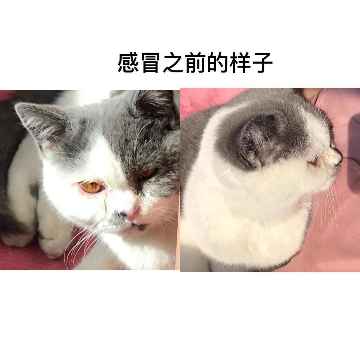 猫眼睛发炎