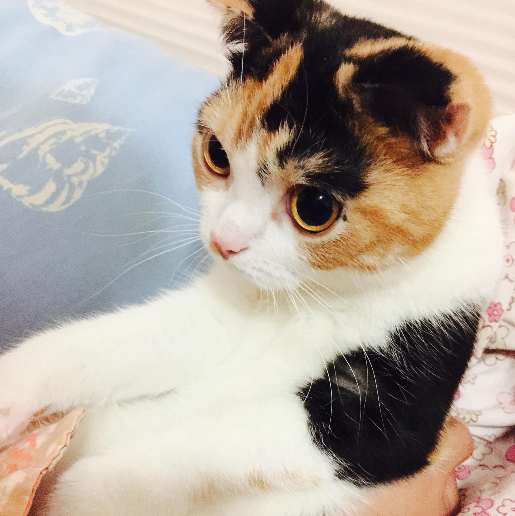猫吃饭的时候做出扒地板的动作是代表什么意思呢?
