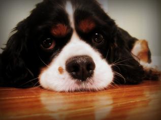 如果我死了,是家里的猫还是狗先吃我?