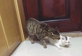 猫咪和狗狗也会寂寞吗?