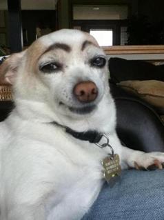 狗狗会撒谎吗?