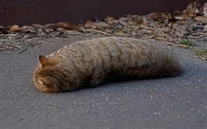 喜欢大胖猫?你还是云养吧