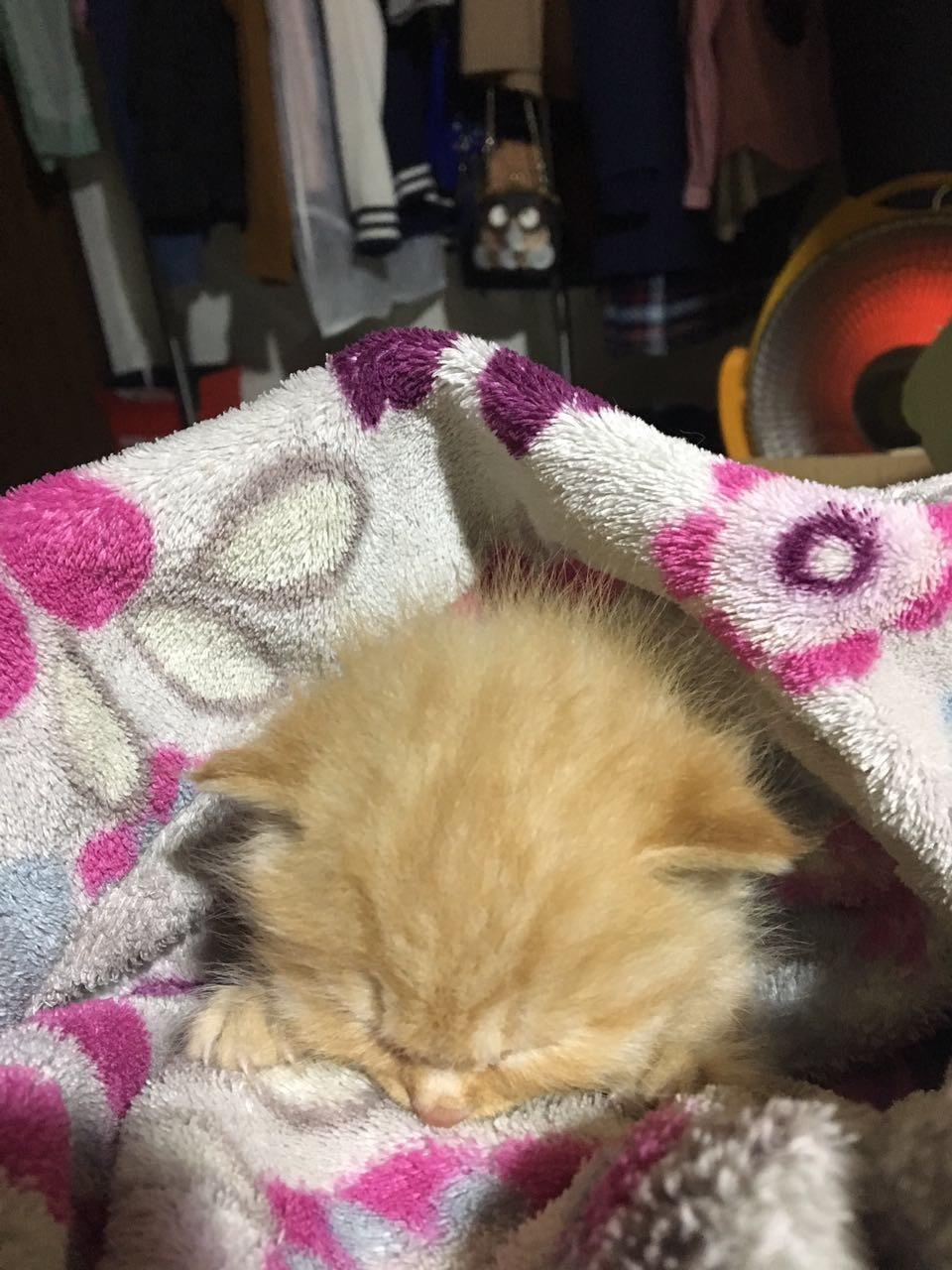 判断小猫年龄!日常护理注意事项!