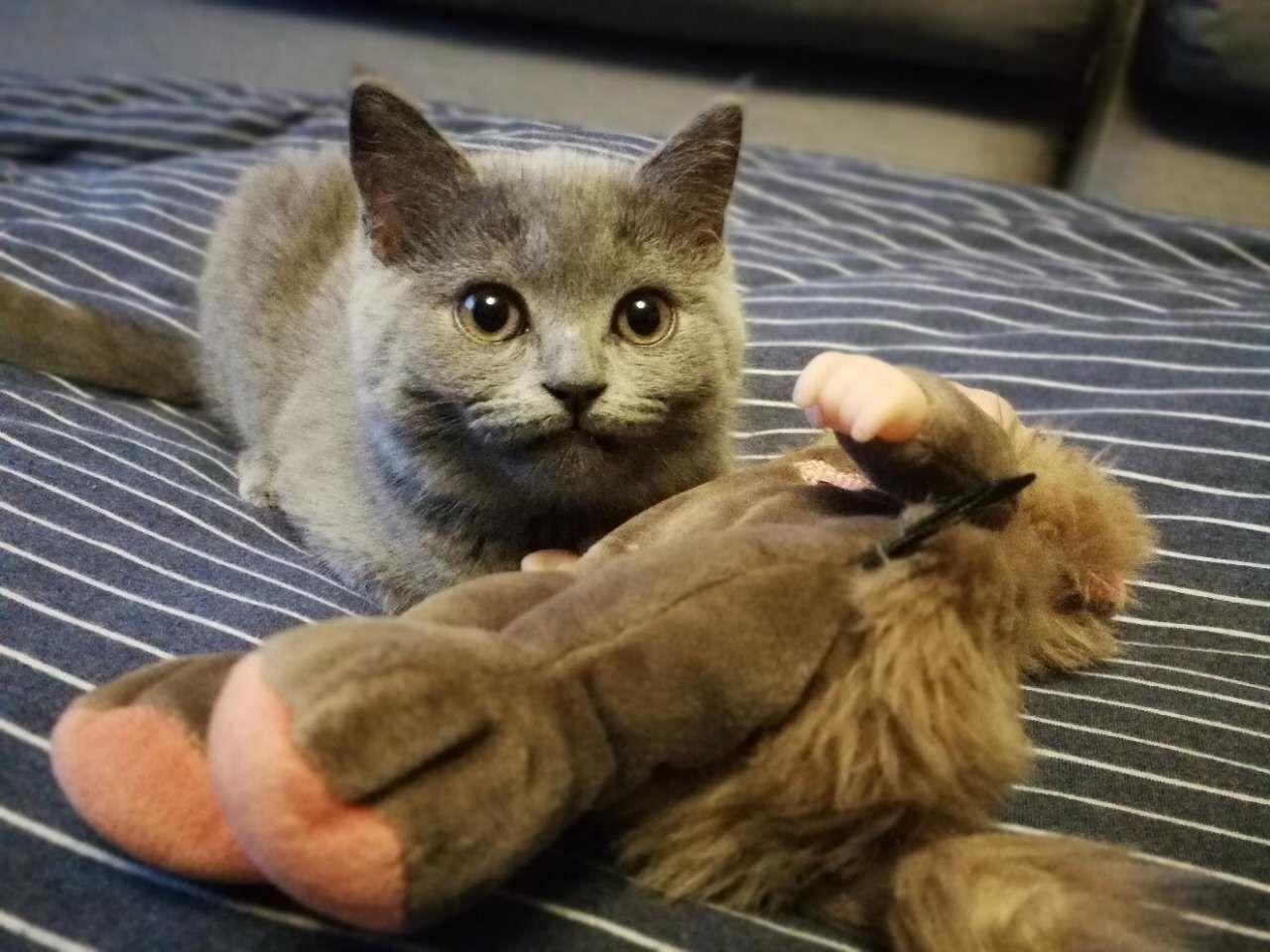 猫咪好像感冒了