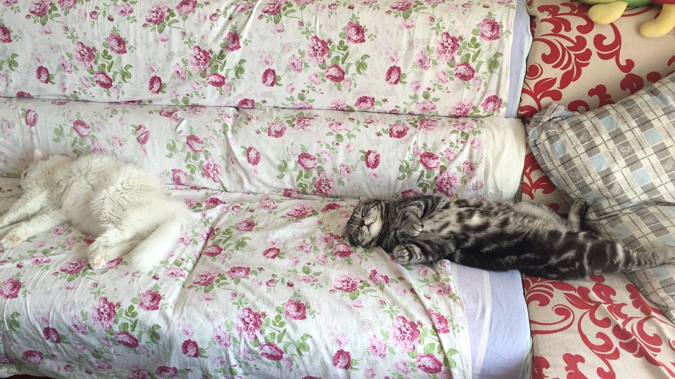 请问这两只猫是打架还是亲昵呢?