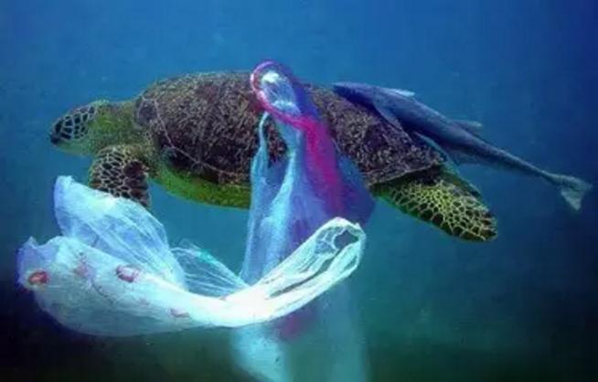被渔网缠住的海洋动物们