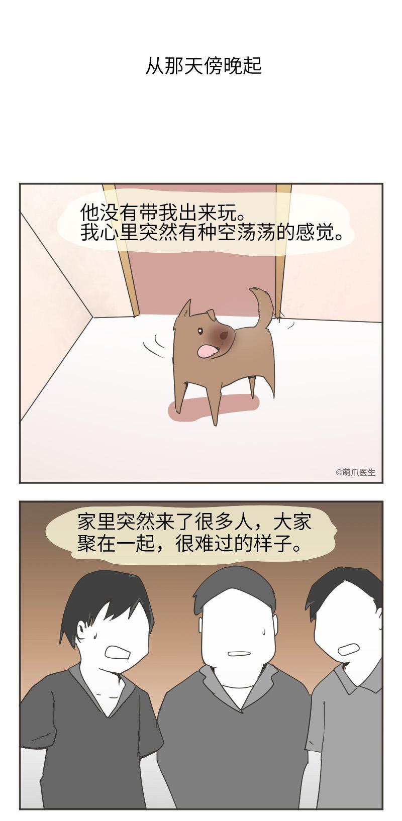 生命会终止,但宠物对你的爱不会。 | 宠物通灵师(四)