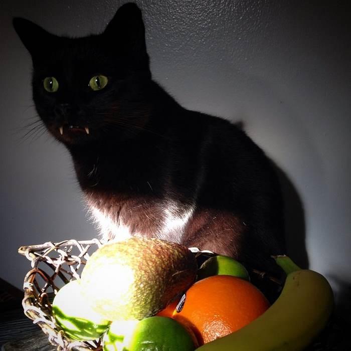 长着獠牙的吸血猫你萌见过么?