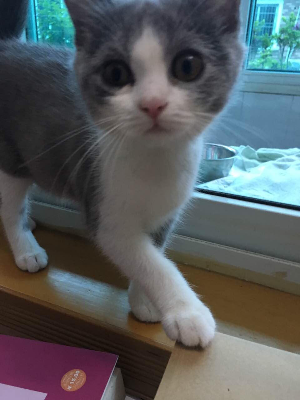 我的猫好瘦而且鼻子颜色变浅了是不是生病了?
