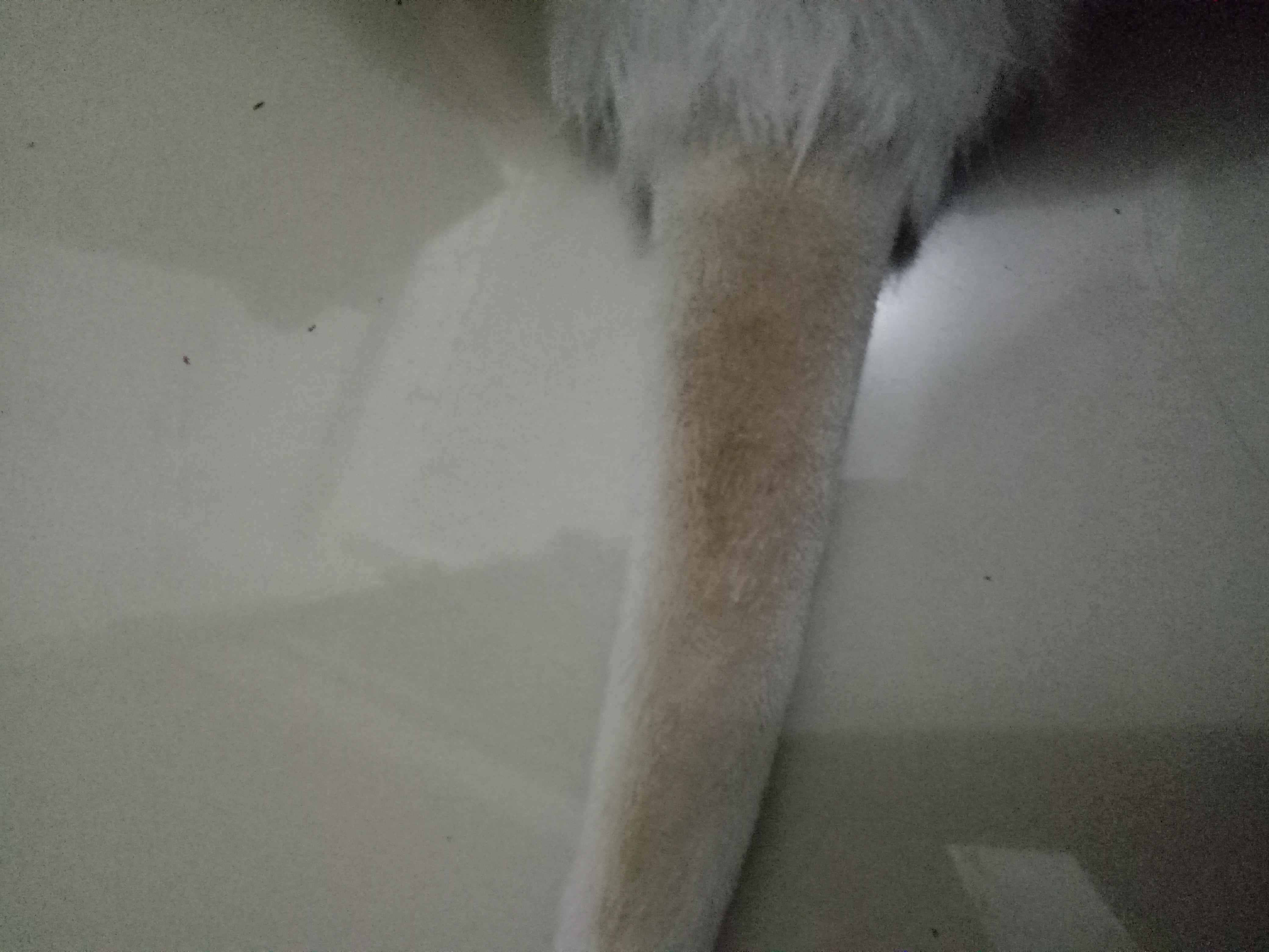尾巴上有大片黑色颗粒物,洗干净后呈现黄色痕迹
