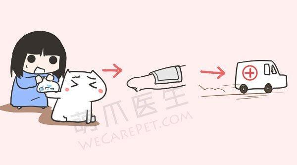 惊闻天津塘沽爆炸事件,宠物遭遇烧伤、外伤时该怎么办?