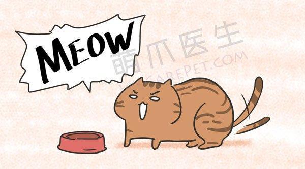 养了这么久猫,这些喵星语你都懂吗?