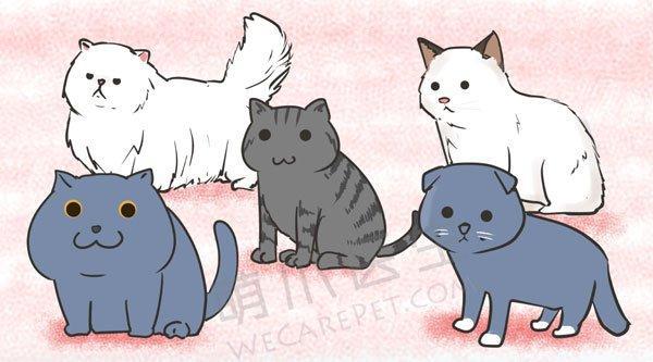 猫的遗传性疾病—肥厚性心肌病(HCM)