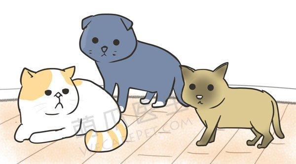 警惕猫咪最常见的泌尿道结石成分之一:草酸钙结石