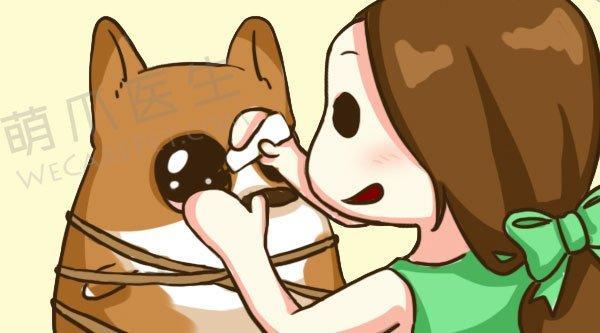 这些宠物常备药品,你家中都有吗?
