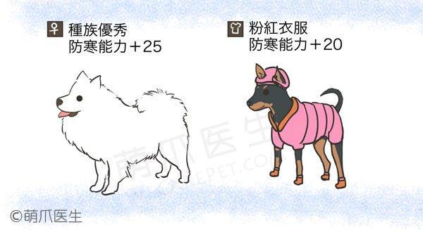 大冷天宠物注意事项