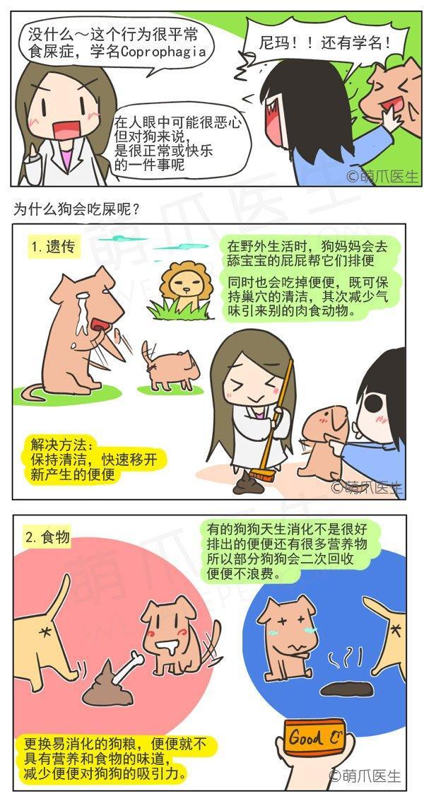 漫画 | 为什么狗狗会吃屎?