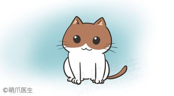 熊孩子行为手册:酥软小奶猫也可能是小恶魔!
