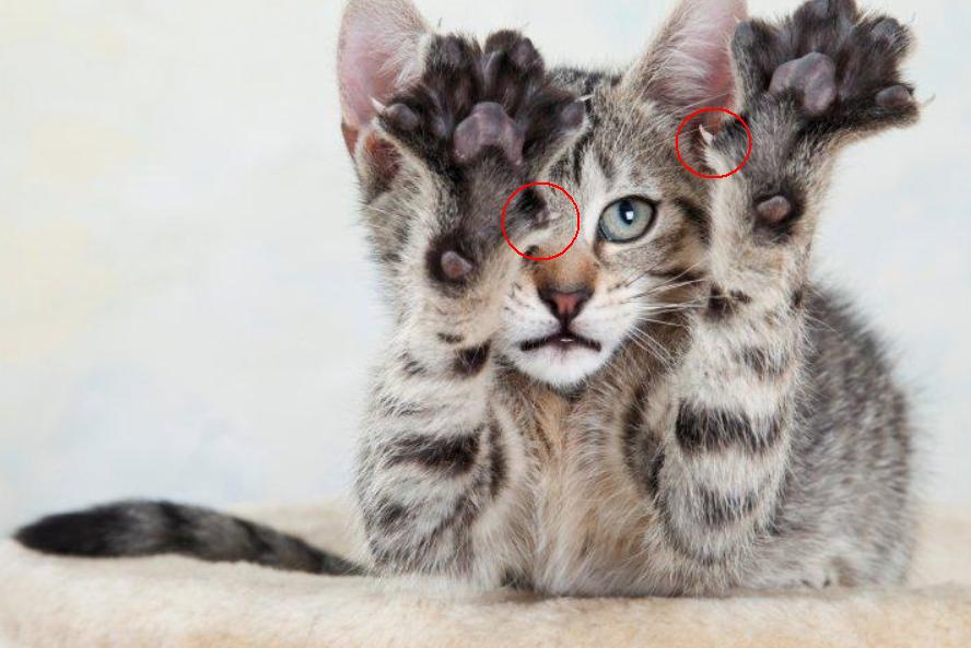 猫狗身体最常被误认的三个正常结构(一)