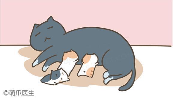 让母猫暂停发情的方法,有哪些利弊?