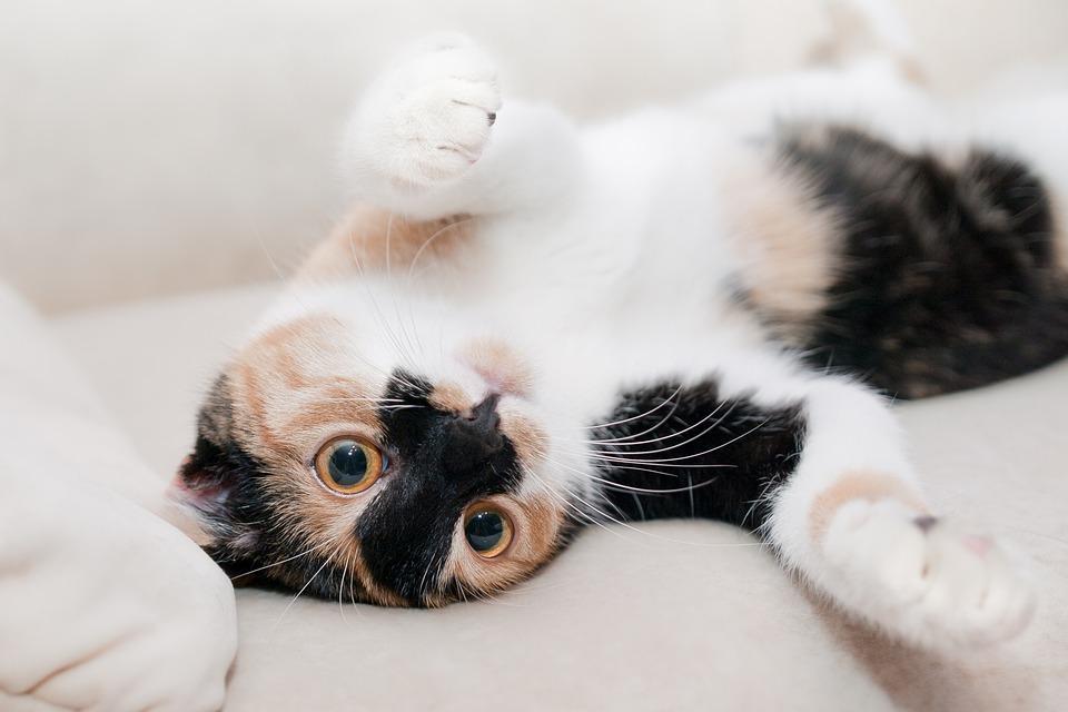怀孕期养宠物,真有那么可怕吗?