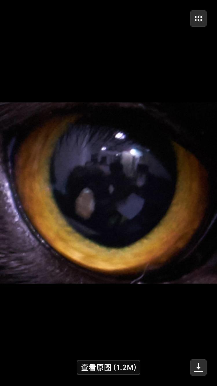 猫眼睛里有异物后来又不见了,需要做什么处理吗