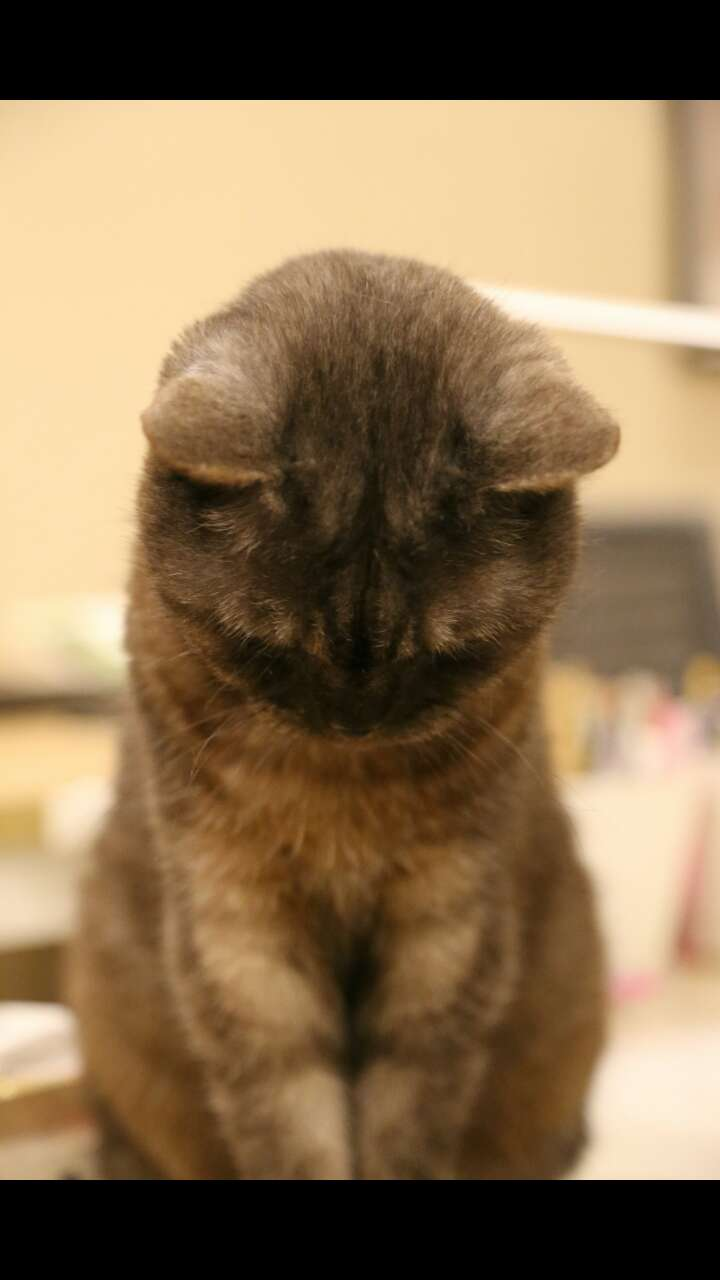 老年猫可以吃幼猫粮吗?