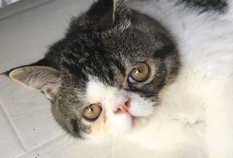 猫砂竟成毒药?你家可能也有