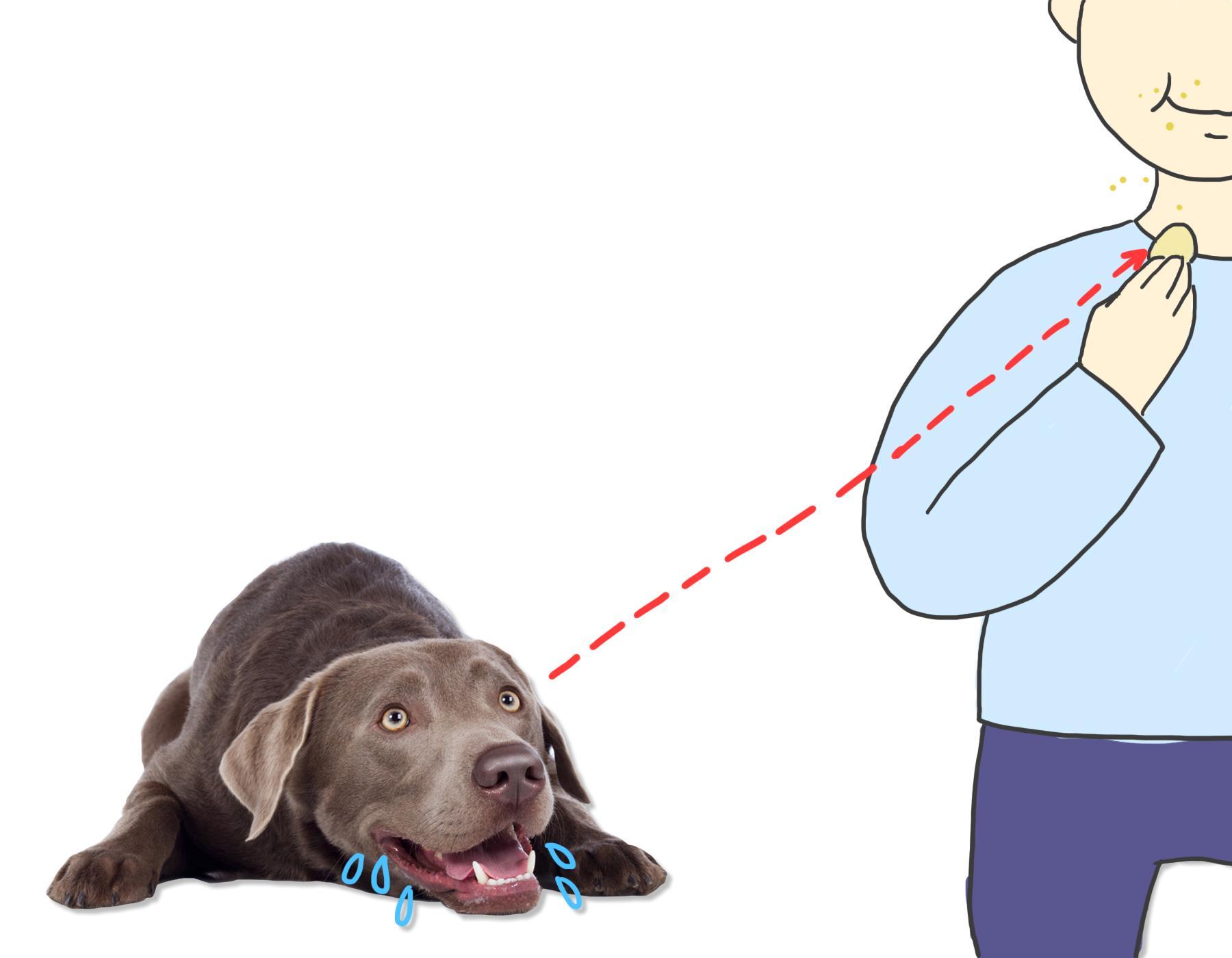 我是行走的大棒骨吗?为什么我的狗狗一直盯着我?