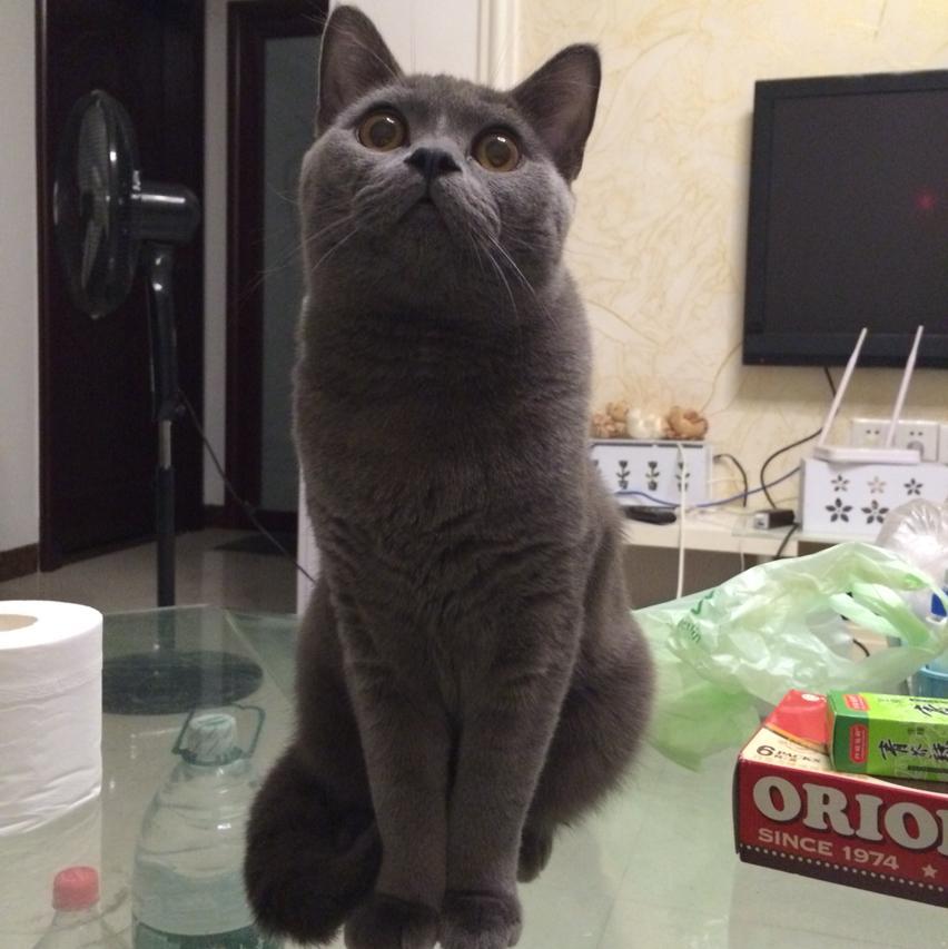 猫咪拉便便图片