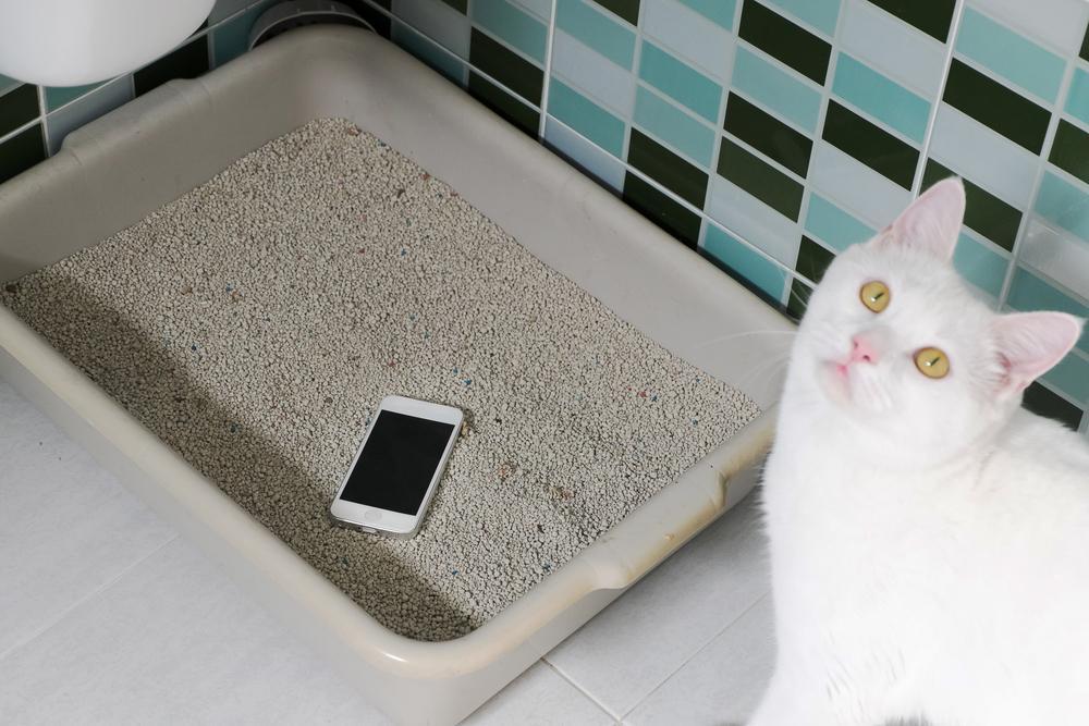 猫在上厕所时的怪异行为