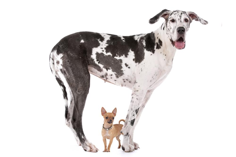 毛球大解密:不同品种猫咪很像,但狗狗长相却千差万别?