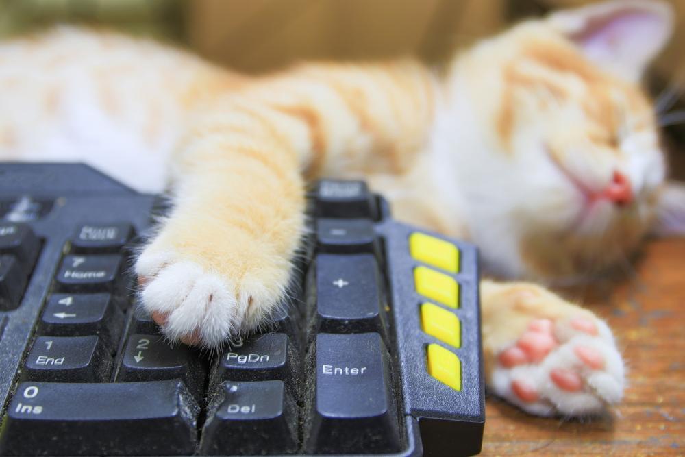 为什么猫咪爱趴键盘?