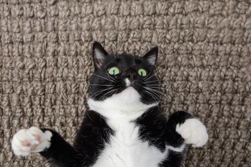 猫咪也会放屁咩?