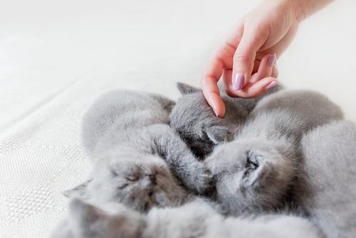 """猫为何对""""摸头杀""""毫无抵抗力?"""