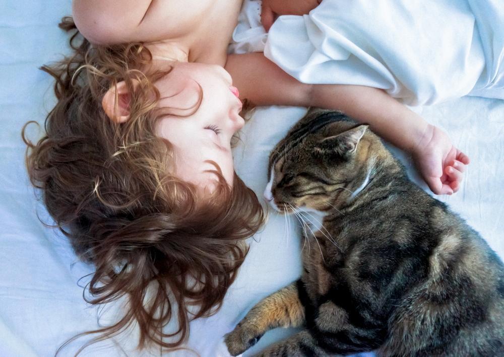 猫为什么对睡在人的头上情有独钟?