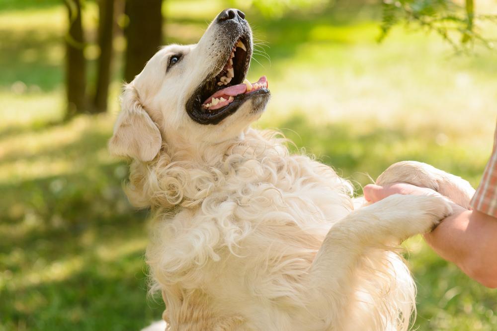 猫狗牙龈问题的N大迹象:你有多久没看过毛球的牙齿了?