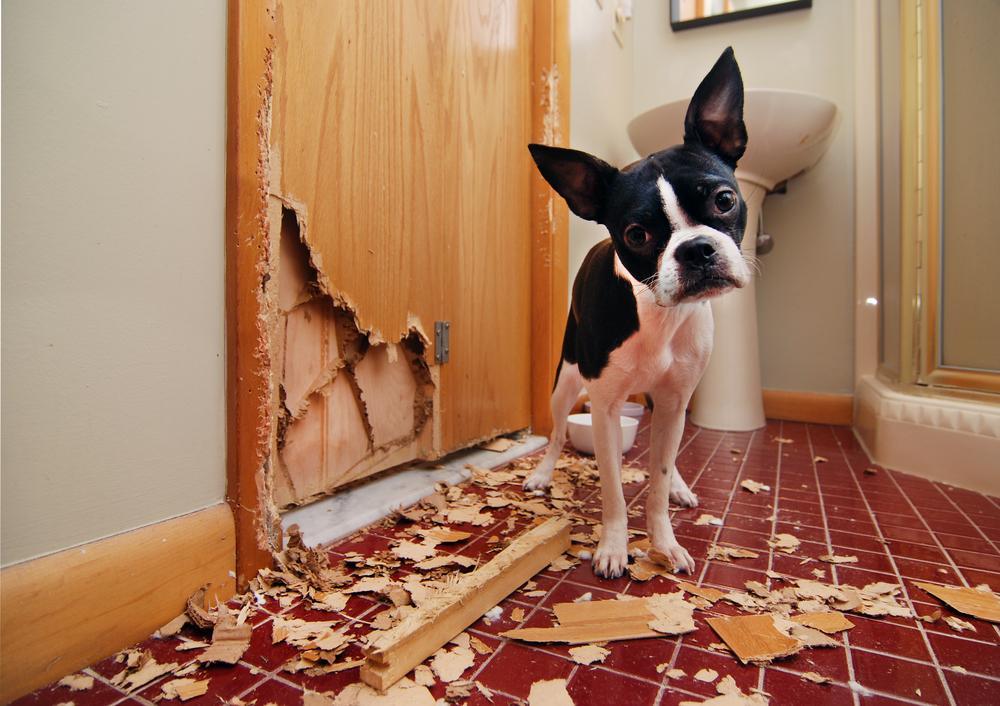 宠物咬了口电线,下巴竟被击穿了?!应对办法看这里!