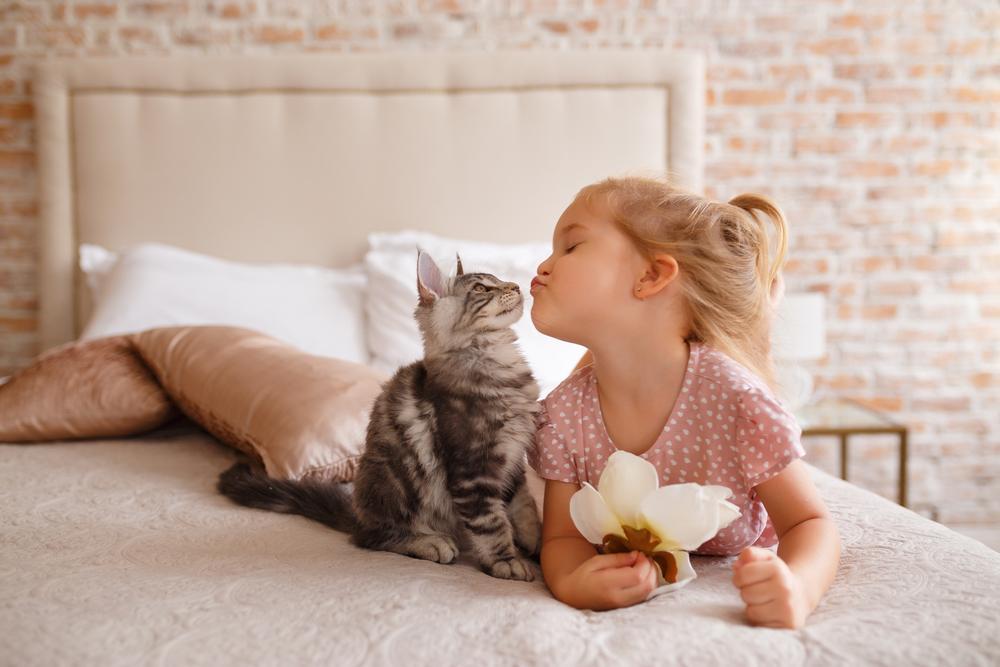 猫狗的死亡之吻:被舔了一口就败血病?